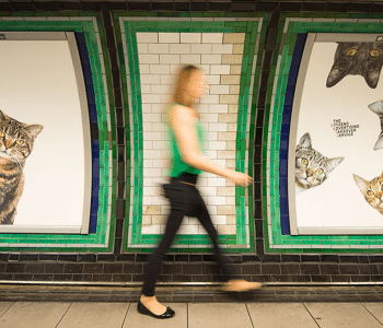 Cats Takeover The Tube