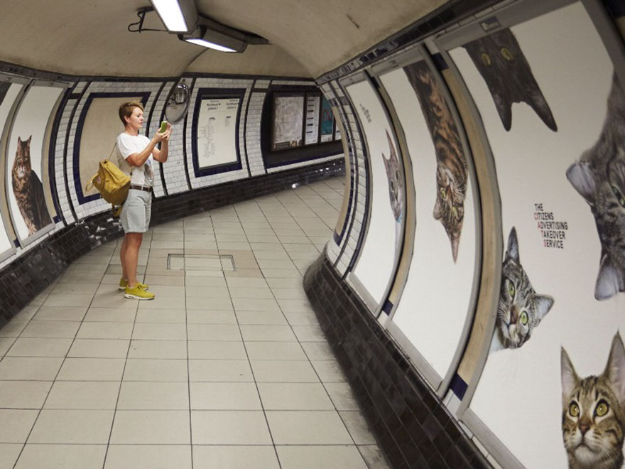 cat-ads-underground-subway-metro-london-1