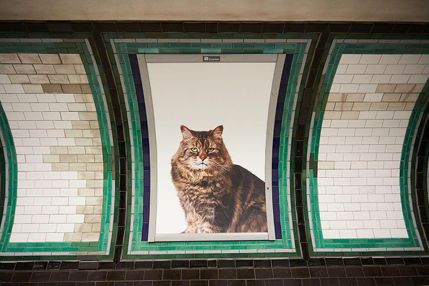cat-ads-underground-subway-metro-london-2