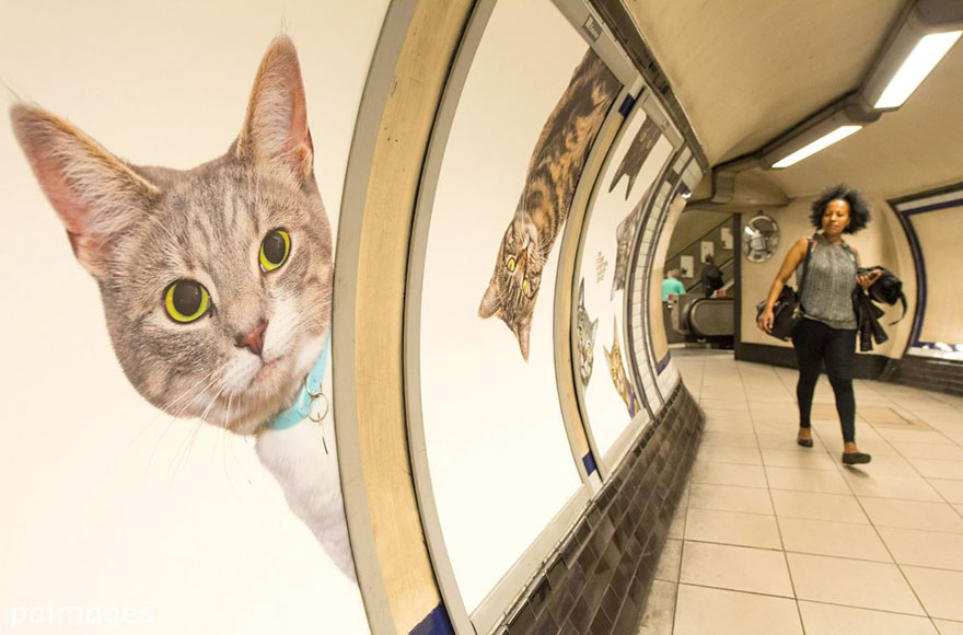 cat-ads-underground-subway-metro-london-6-1